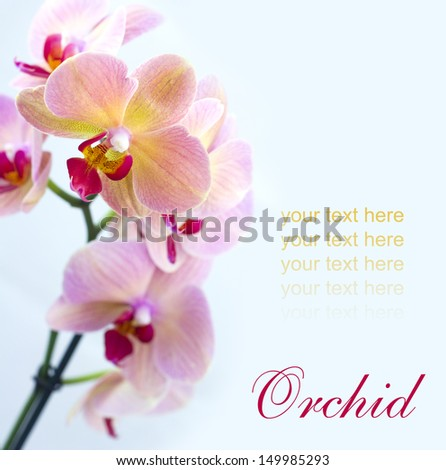 Beautiful  brick red orchid on bright background.  - stock photo