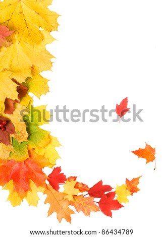Beautiful bright autumn leaves isolated over white - stock photo