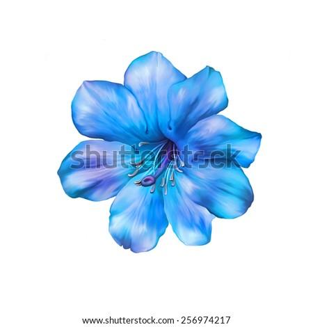 Beautiful bright blue Flower. Isolated on white. Illustration - stock photo
