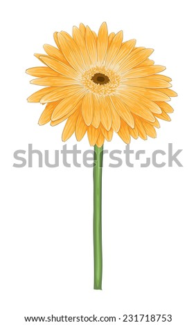 beautiful bright yellow gerber isolated on white background. Perfect for background greeting cards and invitations to the wedding, birthday. additional format in the profile of the artist - stock photo