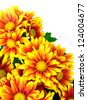 Beautiful bright yellow-orange chrysanthemums. - stock photo