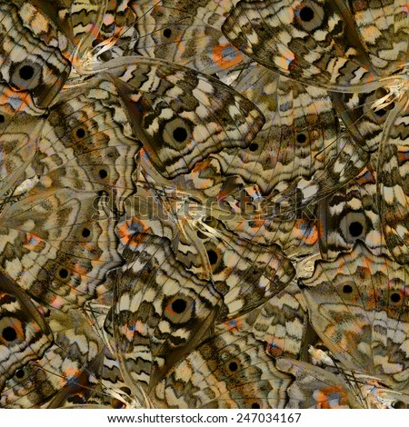 Beautiful brown background texture made of Grey Pansy butterfly's lower wing skins - stock photo