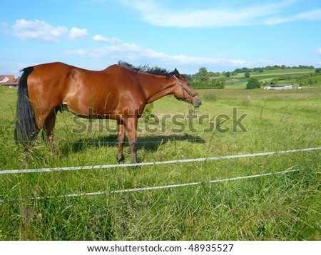 Beautiful brown horse in a green field - stock photo