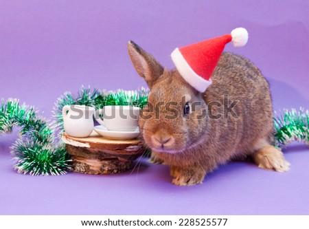 Beautiful brown rabbit in Santa Claus hat - stock photo