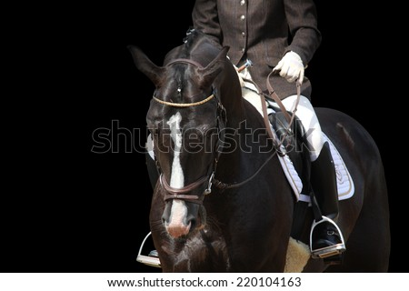 Beautiful brown sport horse portrait isolated on black background - stock photo