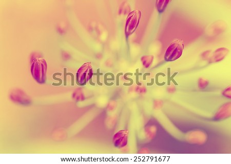Beautiful buds of an african lilly flower in vintage colors - stock photo