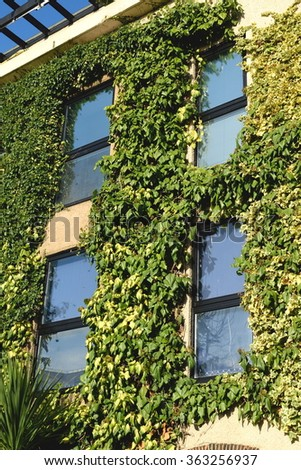 Beautiful building in London, England  covered with green ivy - stock photo
