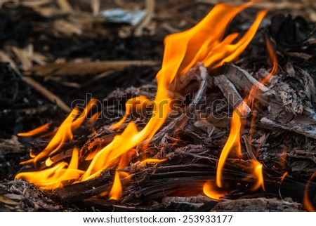 beautiful burning fire flame - stock photo
