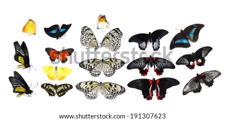 Beautiful butterflies, isolated on white - stock photo