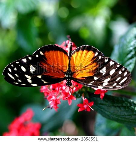 Beautiful Butterfly. - stock photo
