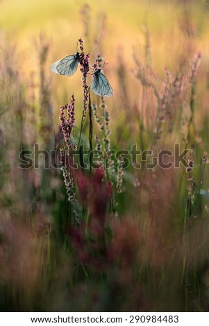 Beautiful butterfly and flower  - stock photo