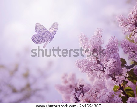 Beautiful butterfly and flowers - stock photo