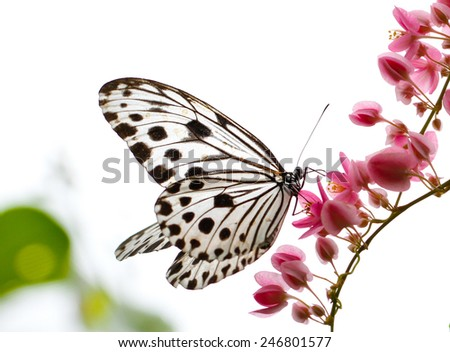 Beautiful butterfly in a butterfly park - stock photo