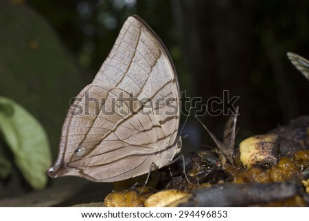 beautiful butterfly in thailand  - stock photo