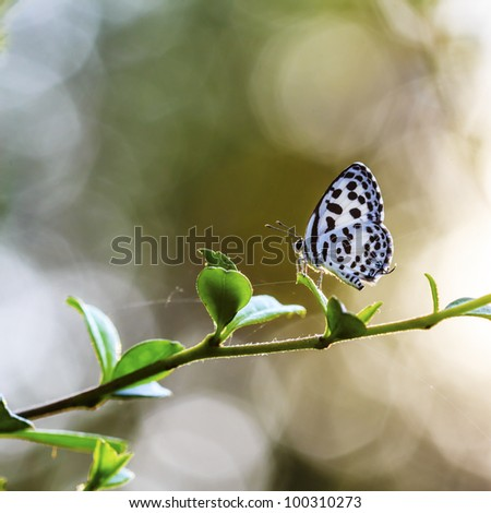 Beautiful butterfly in the meadow. Lesser Grass Blue Zizina otis. - stock photo