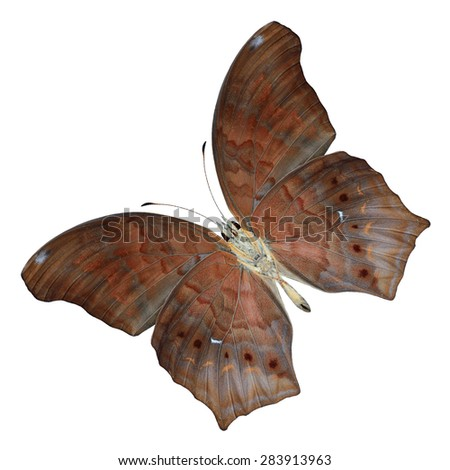 Beautiful butterfly Large Assyrian lower wing profile isolated on white background - stock photo