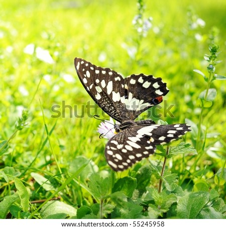 Beautiful butterfly on a flower - stock photo