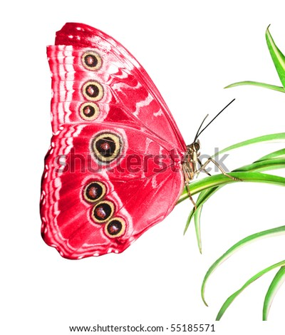 beautiful butterfly on a green leaf - stock photo