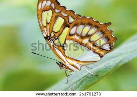 beautiful butterfly on a leaf with space for text  - stock photo