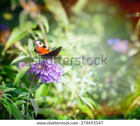 beautiful butterfly on butterfly bush over blurred flowers garden background - stock photo