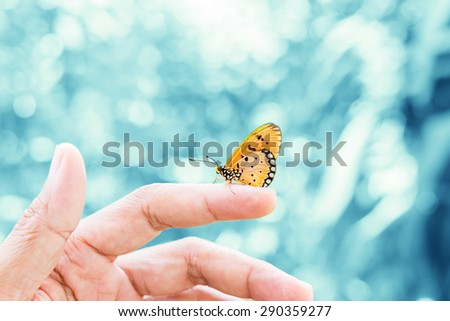 Beautiful butterfly sitting on hand  - stock photo