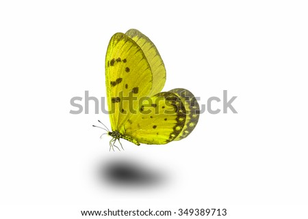 Beautiful butterfly wing isolated on white background - stock photo
