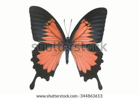 Beautiful butterfly wing isolated on white background,Blue Emperor Ulysses - stock photo