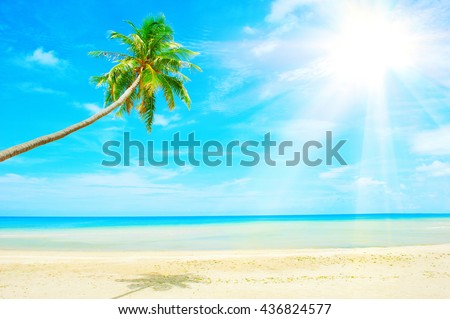 Beautiful Caribbean beach. Beach with palm tree over the sand - stock photo