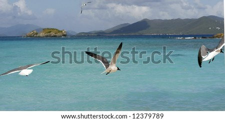 beautiful caribbean seascape with seagulls flying - stock photo