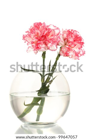 Beautiful carnations transparent vase isolated on white - stock photo