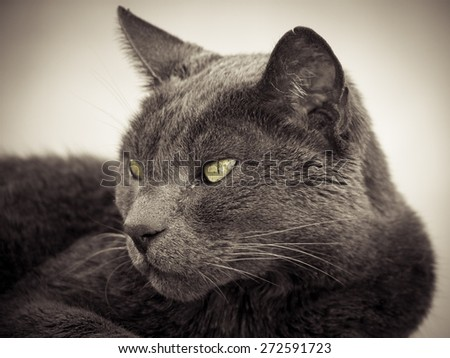 beautiful cat close-up  - stock photo