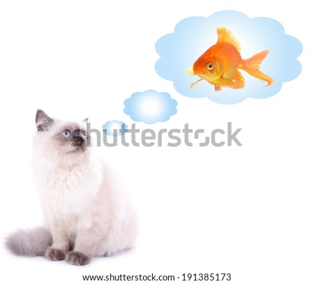 Beautiful cat dreaming of gold fish, isolated on white - stock photo