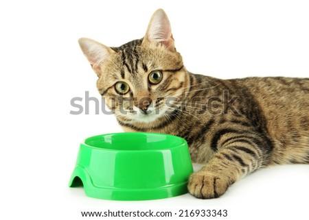 Beautiful cat eating, on white background - stock photo