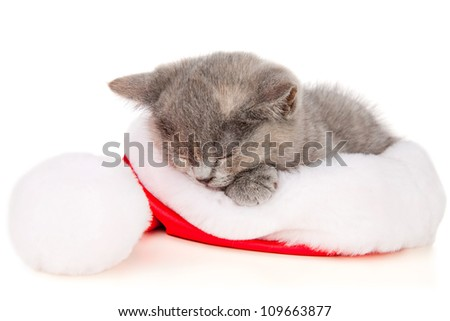 Beautiful cat in a Santa Claus hat - stock photo