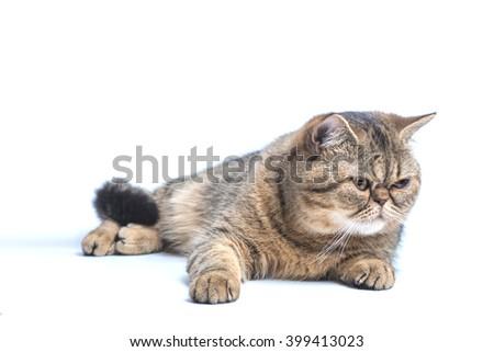 Beautiful cat isolated lying on white background - stock photo