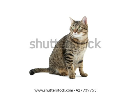 Beautiful cat isolated on a white, close up - stock photo