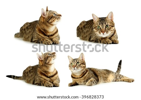 Beautiful cat isolated on a white, collage - stock photo