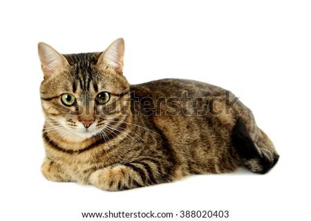 Beautiful cat isolated on white - stock photo