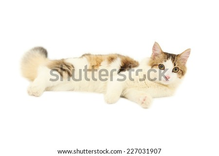 Beautiful cat isolated on white background - stock photo