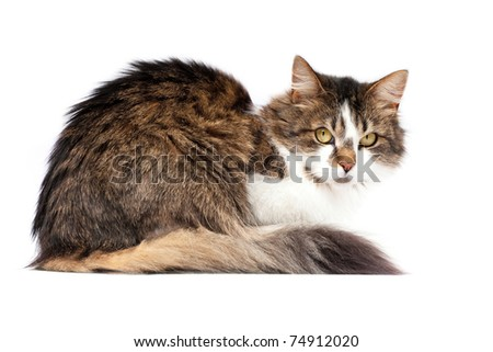 Beautiful cat isolated over white background - stock photo