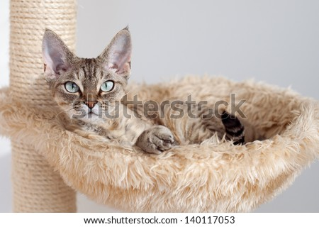 Beautiful cat laying in hammock on the scratching post - stock photo