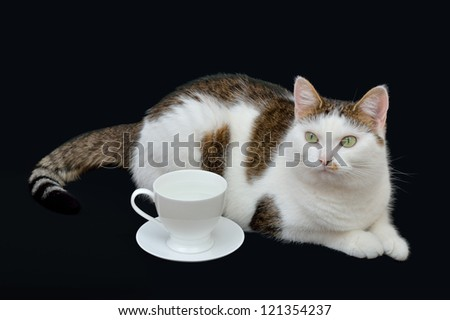 Beautiful cat lying on the black background near to white cup - stock photo