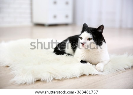 Beautiful cat on carpet, indoor - stock photo