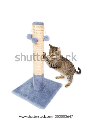 Beautiful cat sharpening its claws isolated on white background - stock photo