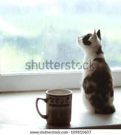 beautiful cat sitting on a window - stock photo