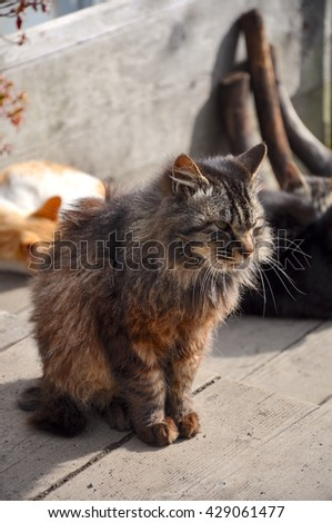 Beautiful cat sitting on old wooden floor with warm from sunny - stock photo