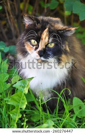 Beautiful cat sitting on the green grass - stock photo
