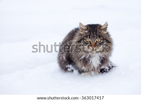 Beautiful cat without home freezing outside on snow in winter - stock photo