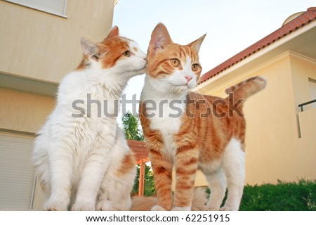 Beautiful cats family on the wall. - stock photo