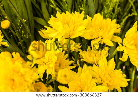 beautiful charming vintage pale yellow aster close up - stock photo